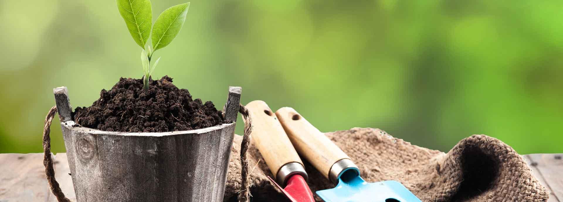 ofertas_en_jardineria_buenos_precios